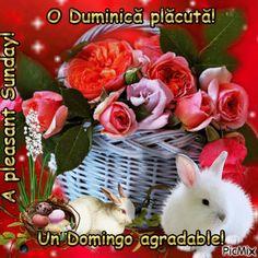 O Duminică plăcută!p2 Spring Time, Sunday, Plants, Domingo, Plant, Planets