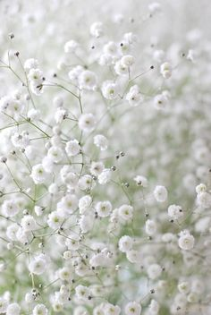 All Things Shabby and Beautiful blogs photo of Baby's Breath blossoms
