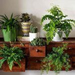 How to make the most of house plants House plants potted plants succulents ferns fig trees and green things in pots. Indoor gardening and botanical design. The post How to make the most of house plants appeared first on Garden Easy. Potted Plants, Garden Plants, Indoor Plants, Hanging Plants, Indoor Ferns, Herb Garden, Potted Succulents, Cacti, Garden Web