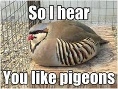 hatoful boyfriend >>> and none of you will understand the pure fear this inspires in us... LORD SAVE ME IT'S SHUU