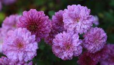 Flower 33 by Mohammad Azam