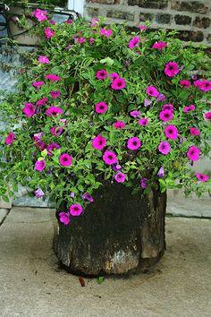 Best old tree stump ideas backyards flower pots 61 ideas Tree Stump Decor, Tree Stump Planter, Log Planter, Tree Stumps, Garden Trees, Garden Paths, Lawn And Garden, Garden Art, Flower Planters