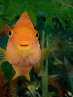 Happy Fish! #HappyAlert