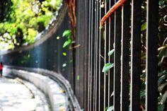 #Diseño #Fotografía #Vida #CaminoyVeo #Reja
