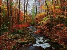 Smoky Mts National Park by Joey BLS Photography