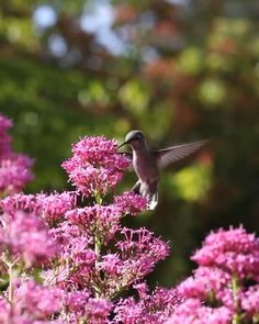 Beautiful Photos Of Nature, Most Beautiful Birds, Beautiful Fruits, Nature Pictures, Lovely Good Morning Images, Good Morning Flowers, Wallpaper Nature Flowers, Beautiful Flowers Wallpapers, Vogel Gif