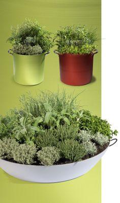 Nelle pentole da giardino Green pot si possono coltivare anche le piante aromatiche; la semplice e bella forma funzionale può divenire contenitore per qualsiasi passione verde.