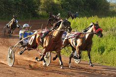 Harness Racing at Corbiewood Stadium, Stirling