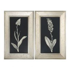 Antique Floral Study Framed Print (Set of 2)