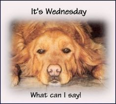 Blassing Sayings and Quotes Good Morning Wednesday 52619 Wednesday Greetings, Wednesday Memes, Happy Wednesday Quotes, Good Morning Wednesday, Good Morning My Friend, Wacky Wednesday, Wonderful Wednesday, Monday Humor, Good Morning Good Night