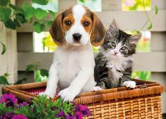 Beagle Dog and Cat - Unlikely Friendships