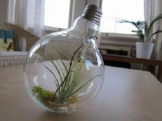 Decorative Plants From Old Light Bulbs › Zuza Fun