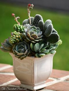 The Succulent Perch
