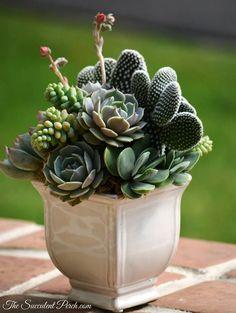 The Succulent Perch