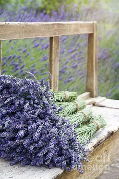 Pile Of Lavender Bouquets On A Wooden Bench Print By Anna-mari West
