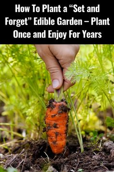 Eco Garden, Edible Garden, Garden Plants, Garden Ideas, Gardening For Beginners, Gardening Tips, Sustainable Gardening, Vegetable Gardening, Greenhouse Farming