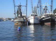 tarpon springs fl | We saw many derelic boats along the water due to huricane damage Tarpon Springs, Sailing Ships, Diving, Mystic, Boats, Greek, Florida, Water, Gripe Water