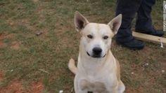 Moviendo su robo alegremente perro lleva la policía a detener su dueño por tráfico de drogas