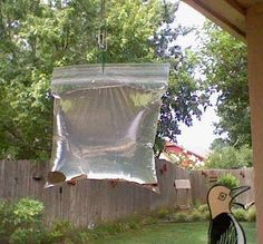 Want to get rid of flies - this works indoors and outdoors. Fill a ziplock with water and a penny and hand it up. I put mine near a window in my office, within 5 minutes the flies were gone. Why I have flies in my office is another dicussion, but this really works! I have seen a fly since I hung up the bag.
