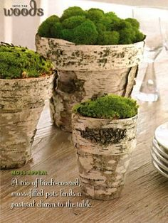 table decor- bark covered pots with moss