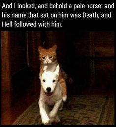 Hell would certainly follow if my cat had to jump on a dog.