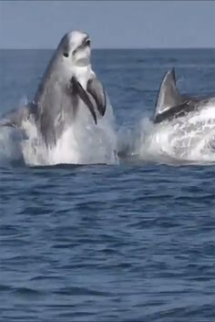 Don't Call It Wholphin A Whale-Dolphin Hybrid Has Been Discovered #seaworld #dolphins #fishes #sea #whale #wholphin #wildlife #animals #dolphin #water #ocean