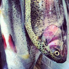 A brace of trout
