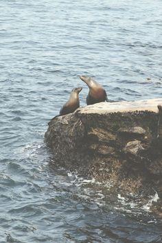 Off The Beaten Path: San Diego #California  Seal Point Beach???  ♥