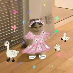 Cute Little Animals, Cute Funny Animals, Cute Cats, Gato Anime, Anime Cat, Cute Memes, Stupid Funny Memes, Cat Dressed Up, Cat Icon