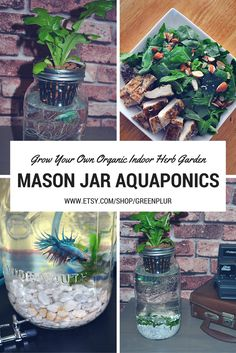 4 Easy Steps to Set-Up Your Own Backyard Aquaponics System - Tools And Tricks Club Backyard Aquaponics, Hydroponic Gardening, Organic Gardening, Aquaponics Plants, Aquaponics System, Fish Garden, Herb Garden, Indoor Garden, Garden Art