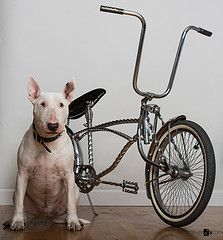 http://thecyclingbug.co.uk/default.aspx?utm_source=Pinterest&utm_medium=Pinterest%20Post&utm_campaign=ad #thecyclingbug #cycling #bike #dog