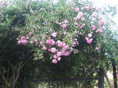 My garden's gate