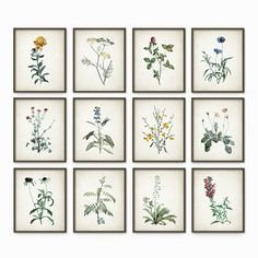 Wild Flowers and Plants Antique Botanical Art Print Set of 12 - Vintage Botanical Home Decor Antique Book Plate - Picture Set of 12 (B223)