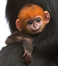 Me, Chimp redhead girl