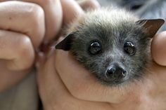 call me crazy, but i think bats are adorable
