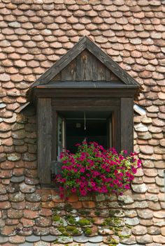 I loved all of the flowers around the windows, in Rothenburg ob der Tauber, Bavaria, Germany German Houses, Rothenburg Ob Der Tauber, Destinations, Reisen In Europa, Garden Windows, What A Wonderful World, Oh The Places You'll Go, Windows And Doors, Architecture Details