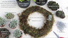 DIY: Create a Cold-Tolerant Succulent Wreath, from Debra Lee Baldwin
