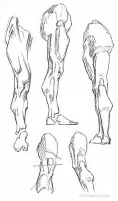 leg anatomy, drawing legs