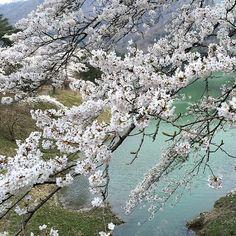 京都市 (Kyoto) in 京都府 Relaxing Holidays, Go To Japan, Future Travel, Travel List, Japan Travel, Where To Go, Kyoto, Beautiful World, Places Ive Been