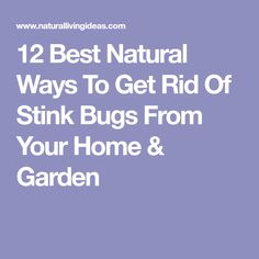 Get rid of stink bugs naturally with these 12 fool proof ideas. Stink Bugs, Garden Bugs, Home Recipes, Pest Control, Rid, Essential Oils, Home And Garden, How To Get, Natural