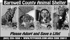 Barnwell County Animal Shelter Ad for August 28, 2013 | Barnwell, SC | Adopt a Pet | The People-Sentinel