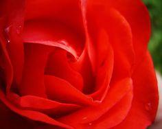 pretty flowers pictures | Pretty Flower desktop wallpaper - 1280x1024