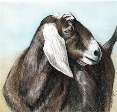 goat art - Поиск в Google