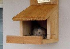 Backyard Bird Company's  Robin/Phoebe/Dove/Swallow Nesting Shelf Natural