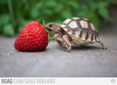 Isn't this turtle adorable?