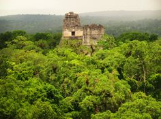 See 10 photos from 65 visitors to Tikal. Tikal, Places Ive Been, Places To Go, Maya Civilization, Mayan Ruins, Archaeological Site, South America, Monument Valley, National Parks