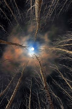"""The moon is friend for the lonesome to talk to."" ~ Carl Sandburg 'Forest & Moon' By Babis Mavrommatis Moon Pictures, Pretty Pictures, Beautiful Moon, Beautiful Places, Foto Picture, Shoot The Moon, Amazing Nature, Night Skies, Belle Photo"