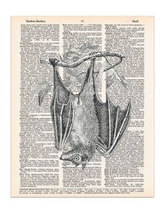 "Hanging Bat Dictionary Page Print, Halloween Gothic Decor, 8x11 UNFRAMED. This hand drawing of a bat hanging from a tree would make a great Halloween decoration, goth decor, or just a decoration for anyone that appreciates bats! Features: * Size = 8"" x 11"" (approximately). * We recommend using an 11""x14"" or larger frame with a mat that has an 8""x10"" opening. * Pages come from real dictionaries that are old and are in danger of ending up in a landfill . * Each print is on a different..."