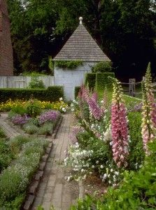 Foxgloves sway over brick-edged beds at the John Blair Garden in Colonial Williamsburg.