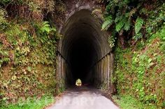 Road Tunnel (only one vehicle at a time) on the Forgotten World Highway,Taranaki - Google Search